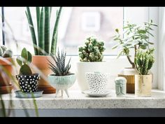 Ideas for planters and plants