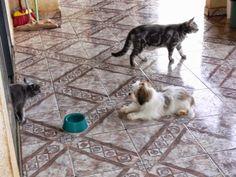 Pets Patinhas: Saindo para passear Preparando para dar uma volta,...