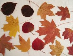 wax paper and mod podge leaves 							 		  		 			 			I love fall leaves!  Thanks for a great tutorial on preserving their beautiful color.  N...