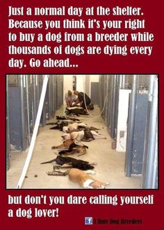 PLEASE, PLEASE, PASS THIS ON! It is a very important issue and is VERY heartbreaking. :(It's hard to look at this, please don't support puppy mills, spay & neuter your pets!!! And ADOPT!!!