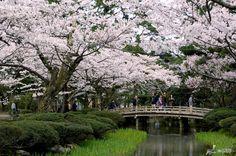 Kenrokuen Garden in Kanazawa