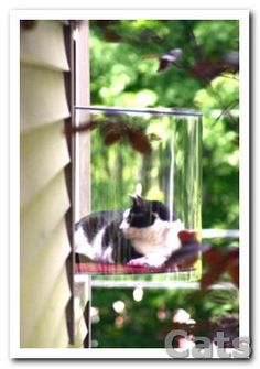 Cat window - Gosh my dog would love this window!