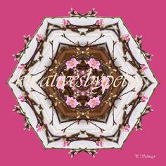 Mandala ''Baum/Blüte''  kreativesbypetra  #mandala #mandalas #mandalaart #mandalastyle #inspiration #innereruhe #spirit #baum #tree #blüte #blossom Mandala Art, Petra, Inspiration, Mandalas, Mosaics, Tree Structure, Canvas, Biblical Inspiration, Inspirational