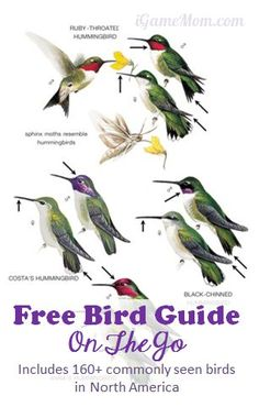 Free bird guide on your mobile device from Peterson Field Guide - Includes 160+ common backyard birds in NA #kidsapps #FreeApps #ScienceApps