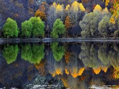 Reflection Colorful Lake Trees Italy Image