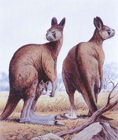 Procoptodon (Giant Kangaroo)