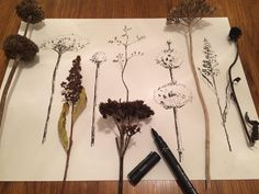 Drawing dried flowers. #drawing #drawings #drawingart #mydrawing #mydraw #pendraw #pendrawing #driedflowers #driedflower #myart #dailydrawing #pen #dailydraw #dailydrawing #blackandwhitedrawing #kunst #art #artwork #tegning #zeichnen #zeichnung #desart #naturedrawing #botany #botanic #botanica #flowerdrawing #flowerlovers