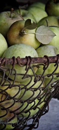 fruit in wire basket
