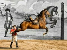 Portuguese school of Equistrian at