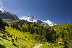 Bernese Alps, Switzerland (by WayneG)