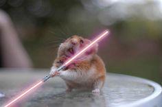 Schokkend! Deze hamsters plannen werelddominantie   Zoo   Upcoming