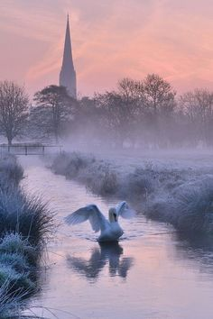 Beautiful swan in winter (The Netherlands - thought I recognized the scenery! Beautiful Swan, Beautiful World, Beautiful Places, Beautiful Pictures, Beautiful Winter Scenes, Beautiful Sunrise, Winter Szenen, Winter Light, All Nature