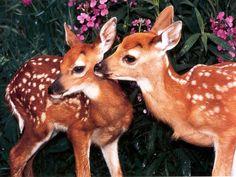 İki küçük sevimli ceylan