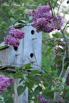 Aiken House & Gardens: Buckets of Lilacs #bird_house