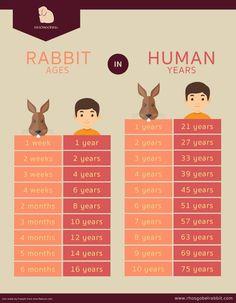 Pet Bunny Rabbits, Dwarf Bunnies, Meat Rabbits, Raising Rabbits, Lop Bunnies, Diy Pour Lapin, Bunny Care Tips, Diy Bunny Toys, Rabbit Behavior