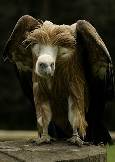 Vulture.  Ominous looking.