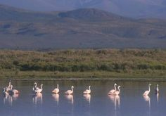 La Laguna de Llancanelo es una reserva natural situada al sur de la Provincia de Mendoza.
