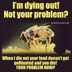 Pollution is milking the Bees... do you think the money grubbing greedy care? No!