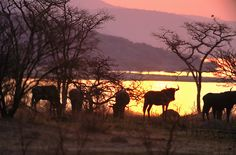 Sunset at Spioenkop - South Africa by South African Tourism, via Flickr