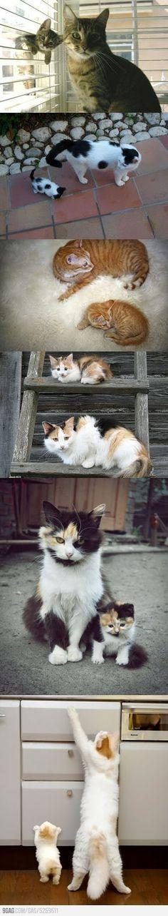 That's cute !