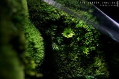 Pre-order: The Vertex ZERO L Pre-designed Completed | Etsy Succulent Terrarium, Planting Succulents, Rare Roses, Big Battle, Moss Wall, Glass Vessel, Hanging Planters, Natural Materials, Cactus Plants