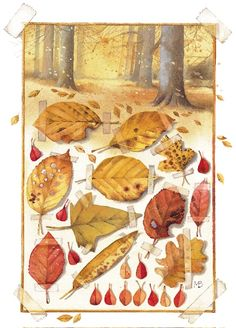 Marjolein Bastin - autumn leaves