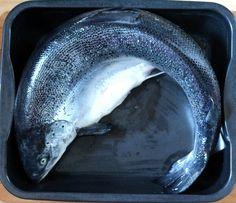 4,132 kg Lachs im Ganzen in Schalottensahne im Ofen gegart   Arthurs Tochter Kocht by Astrid Paul