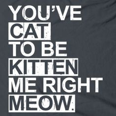 Cat..... Kitten.....