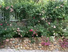 Rambling roses over old stone cottage and rock wall