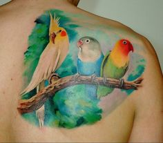 Beautiful bird ink - Lovebirds and Cockatiel - color, shading