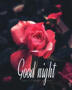 Good Night Lover, Good Night Thoughts, Good Night Hindi, Good Night Wishes, Good Night Sweet Dreams, Good Night Quotes, Good Morning Good Night, Gud Night Images, Photos Of Good Night