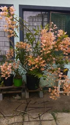 19 Exotic Types of Tropical Flowers for Home Decorations (Various Colors) Flowers Nature, Exotic Flowers, Tropical Flowers, Tropical Plants, Orchid Planters, Orchids Garden, Rare Orchids, Dendrobium Orchids, Tropical Flower Arrangements