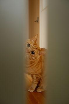 Peek - a - boo cat ♥
