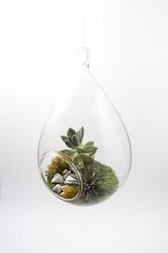 Hanging Tear Drop Terrarium Glass available at Pigment to build your own terrarium