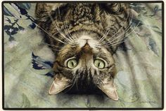 Choose from a wide variety of Tabby cat gifts, merchandise, and products from Animal Den. Perfect for tabby lovers of all ages. Pretty Cats, Beautiful Cats, Crazy Cat Lady, Crazy Cats, Munier, Cat Gifts, I Love Cats, Cat Art, Cats And Kittens