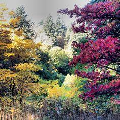 Autumn at Hoyt Arboretum.
