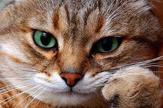 Tu gato piensa que eres un gato mucho más grande