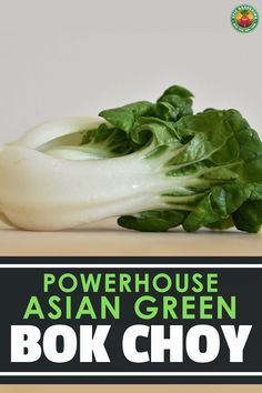 If you love stir fries, growing bok choy ensures you a constant supply. Our in-depth guide reveals all you need to know!