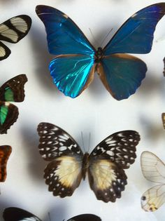 BUTTERFLY~collection