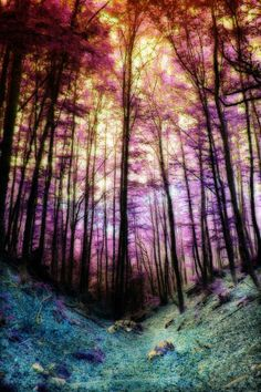 Jewel toned fairy tale forest