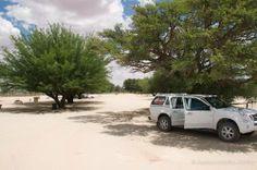 Nossob campsite has beautiful shady trees Africa Travel, Us Travel, Shady Tree, Paladin, Campsite, Traveling, Trees, Park, Life