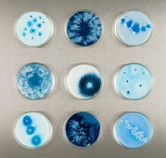 Artist Michele Banks is inspired by scientific experiences on basterias to imagine her creations. She paints imaginary bacterias on culture dishes. Her artworks Bio Art, Mixed Media Artwork, Mixed Media Artists, Growth And Decay, Petri Dish, A Level Art, Science Art, Watercolour Painting, Elementary Art