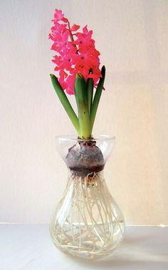 Bulb vase/forcing vase/Hyacinth glass. I did this and all my flowers grew super tall and fell over... :(