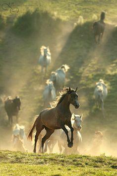 Stadnina Koni Tarnawka Arabians | Photographer Katarzyna Okrzesik. Cavalos soltos na natureza