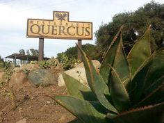 Quercus Restaurant, Ensenada - Fotos, Número de Teléfono y Restaurante Opiniones - TripAdvisor