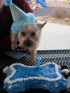 How to host a birthday party for your dog.