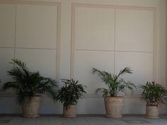 some random plants