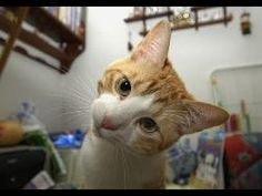 TOP Funny Cats 2014 Funny Cats Compilation Funny Videos Funny Animals Compilation 2014 best HD http://www.youtube.com/watch?v=g1XNsWQV4bM