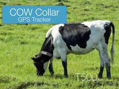 T5020S solar GPS livestock tracker collar with 20000mA battery built-in