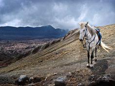 Horse of bromo by Roy Prasetyo, via 500px